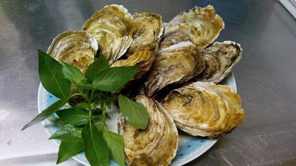 新鮮帶殼牡蠣/生蠔