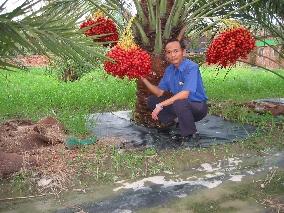 有機經濟作物DATE PALM的栽培