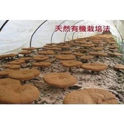 天然有機靈芝栽培法