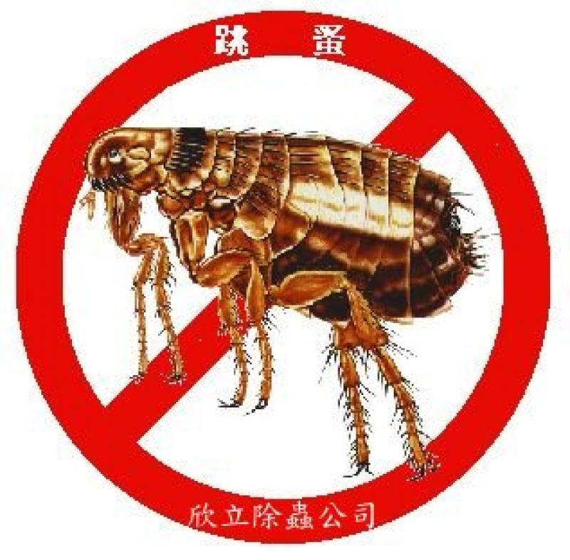 白蟻跳蚤蟑螂消毒