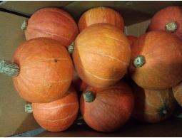 專營各種生鮮蔬菜批發零售...