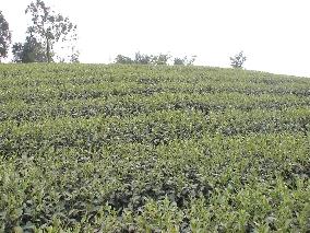 天野茶業食品有限公司