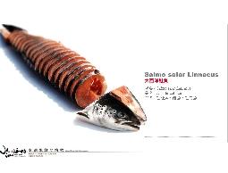 【水汕海物】酷寒北歐挪威Marineharvest公司,全鮭魚輪切。