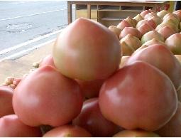 宜蘭溫泉蕃茄