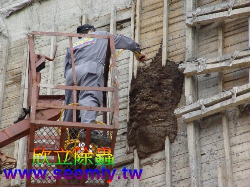 大樓外牆長了一個好大的白蟻窩