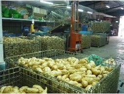 佳味地瓜批發~碳烤地瓜用地瓜~炸薯條用地瓜~碳...