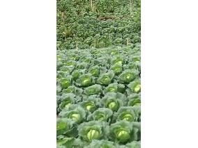 皇興農農產有限公司
